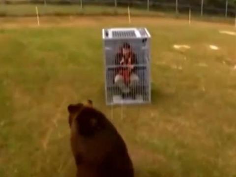男子作死挑战几百斤的棕熊, 接下来一幕让他懵了!
