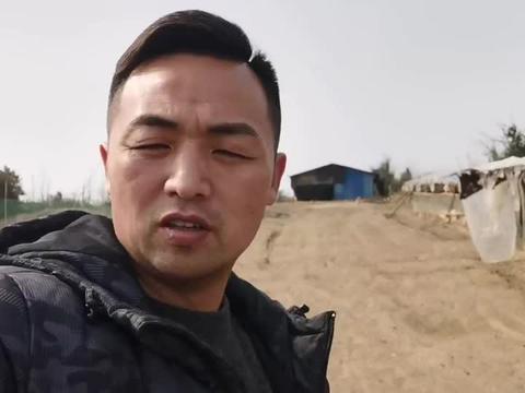 离开深圳回农村创业养鸡,养殖业真的那么简单吗?看看真实情况