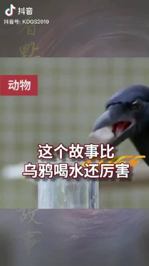 乌鸦除了捡石子喝水,原来还有这么多聪明的方面!