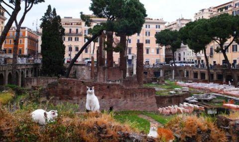 罗马猫痴迷古老的神殿,最古老的庙宇,却成猫的庇护所。