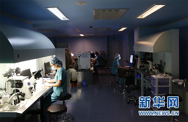 银川市妇幼保健院工作人员在胚胎实验室忙碌