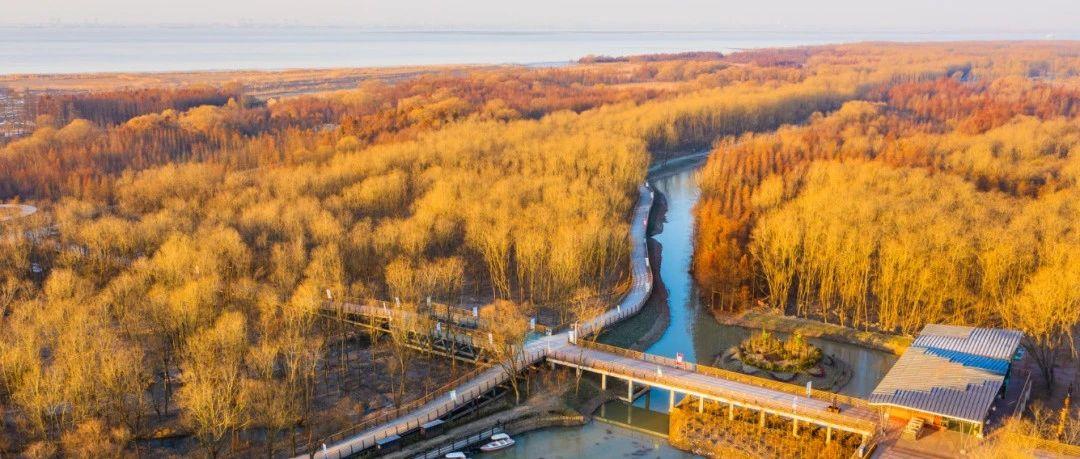 【图集】久未露面的西沙湿地近况如何?来看最新冬日美图
