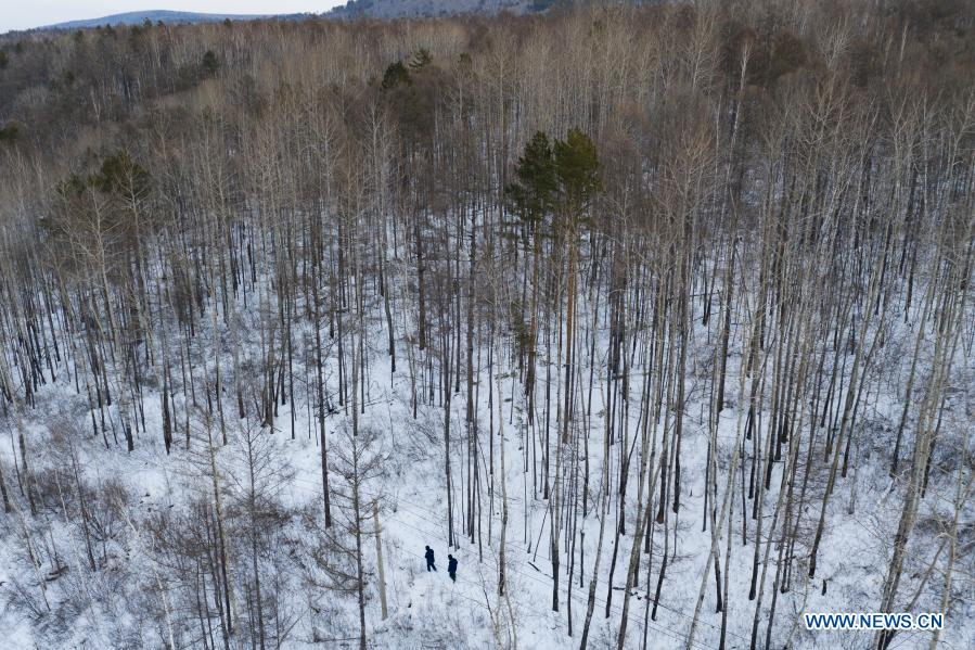 Aerial photo taken on Jan. 12, 2021 shows Lyu Jiansheng and Wang Shaoting conducting power line patrol in the forest near Beiji Village of Mohe City, northeast China's Heilongjiang Province. Beiji Village, located in Mohe City, the northernmost city in China, could only rely on small diesel generators for power supply before 2007. After connecting to the State Grid, Beiji Village set up the northernmost power supply station in China, the Beiji Power Supply Station. Director Lyu Jiansheng and meter reader Wang Shaoting are the only two staff members of the station which is in charge of more than 20 kilometers of overhead lines and 70 kilometers of buried cable lines around it. The temperature in the village often drops to below minus 40 degrees Celsius, and they patrol along the line every once in a while. In 2020, the power supply station renovated multi-functional exhibition hall and canteen, purchased kitchenware and installed bathroom.