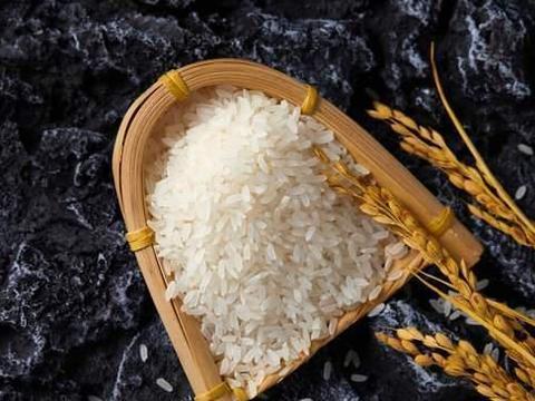 江苏粳稻突破1.5,南强北弱还在上演,东北稻谷跟涨?粮商咋说