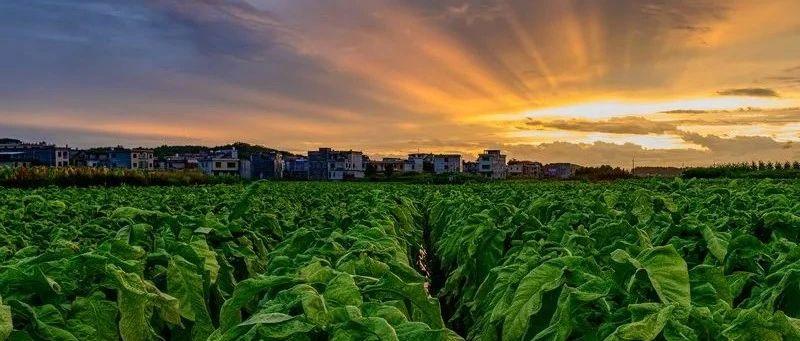 拍点推荐   嘉禾:田园小城,产业铸都