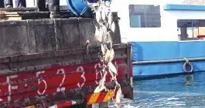 广元市生态渔业发展有限公司向白龙湖投放鲢鳙鱼苗10万尾