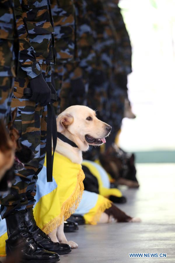 A sniffer dog led by its trainer prepares to attend a pass ceremony at the Sri Lanka Air Force (SLAF) Base in Katunayake, Sri Lanka, Jan. 13, 2021. A group of 20 dogs under the SLAF Dog Unit attended the pass ceremony on Wednesday. They were specially trained as sniffer dogs for detecting of drug trafficking, and would be deployed at airports in the country. (Photo by Ajith Perera/Xinhua)