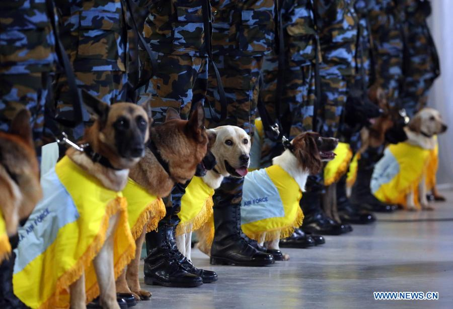 Sniffer dogs led by their trainers prepare to attend a pass ceremony at the Sri Lanka Air Force (SLAF) Base in Katunayake, Sri Lanka, Jan. 13, 2021. A group of 20 dogs under the SLAF Dog Unit attended the pass ceremony on Wednesday. They were specially trained as sniffer dogs for detecting of drug trafficking, and would be deployed at airports in the country. (Photo by Ajith Perera/Xinhua)