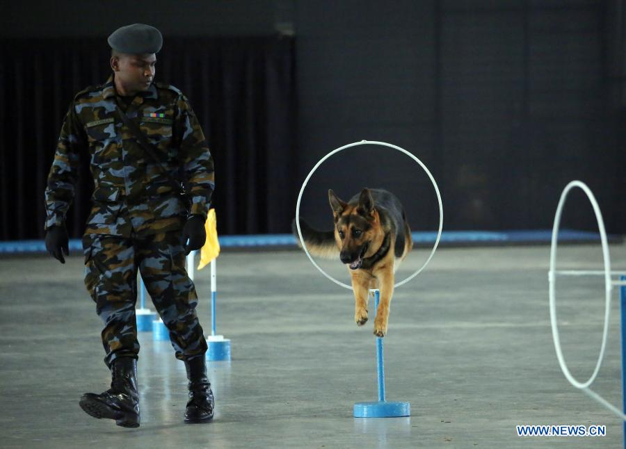A sniffer dog led by its trainer performs hoop-hopping at the Sri Lanka Air Force (SLAF) Base in Katunayake, Sri Lanka, Jan. 13, 2021. A group of 20 dogs under the SLAF Dog Unit attended the pass ceremony on Wednesday. They were specially trained as sniffer dogs for detecting of drug trafficking, and would be deployed at airports in the country. (Photo by Ajith Perera/Xinhua)
