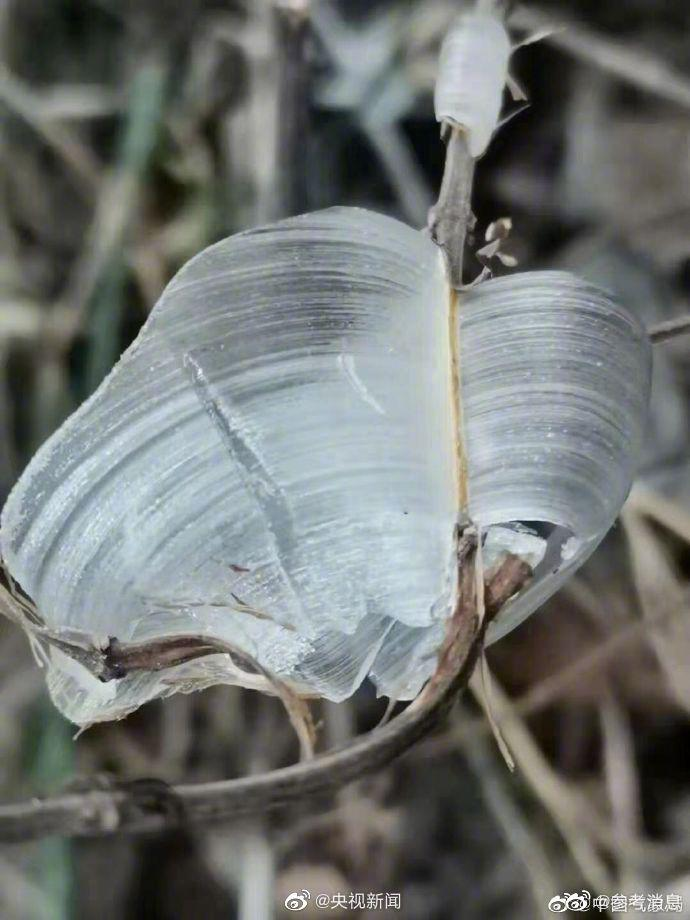 大自然的创意!山西侯马冰蝴蝶景观
