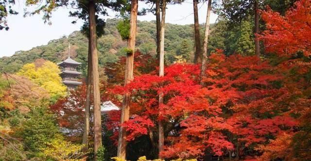鸟取岛根景点推荐:超美红叶樱花、遗产级夕阳,山阴必去绝景巡礼