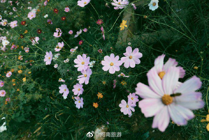 宠辱不惊看庭院花开花落,去留无意望天空云卷云舒……