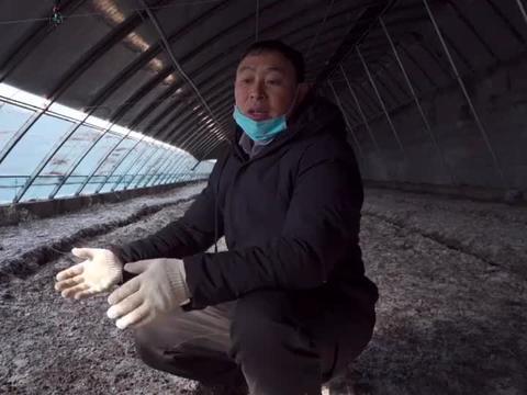 北方暖棚种植羊肚菌,去年亩产1000斤,温湿度可控高产概率更高