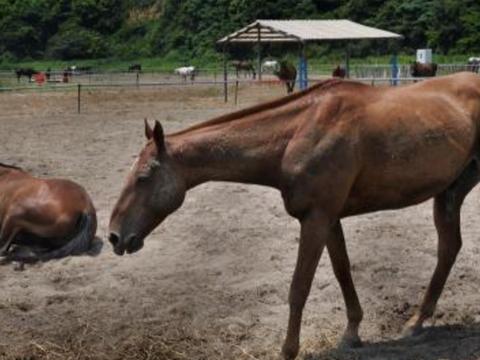 马场主人将一匹马送给外国朋友,可交付当天,马儿做出意外举动!