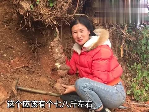 姑娘挖到生长了30年的野生何首乌,有8斤重,你觉得能卖多少钱?