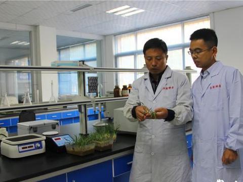 """3万农户搭上了制种富民""""顺风车"""",宁津把小麦良种做成主导产业"""