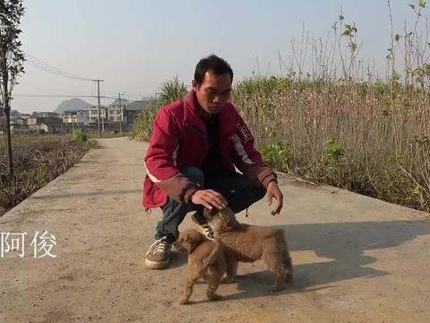 阿俊发现两条好小狗,小狗还没断奶他就下定金预定了