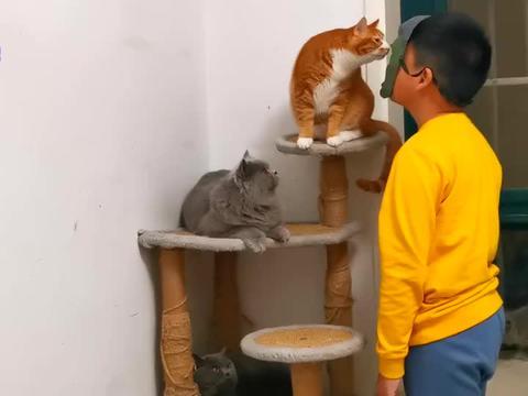 小主人戴面具测猫咪反应,有的淡定有的慌张,橘猫的表现要成精