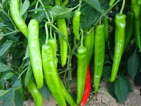 冬季蔬菜种植,学会这一招儿,阴雨天多也不用担心蔬菜长不好!
