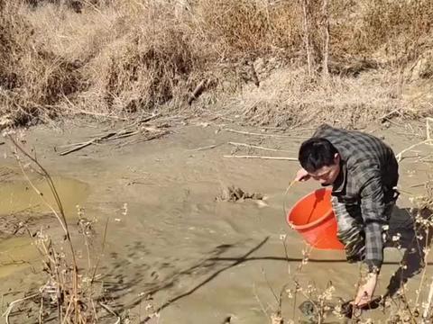 20平米的小鱼塘,放养了30块钱鱼苗,把水放干看看能抓多少鱼?