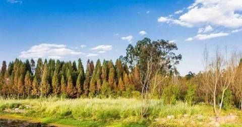 昆明市一公园,因绝美风景屡次荣登央视,令人大饱眼福