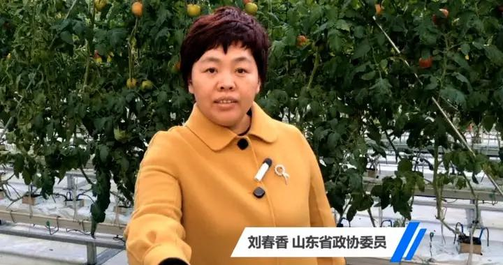 山东省政协委员刘春香:发展数字农业 促进农业高质量发展