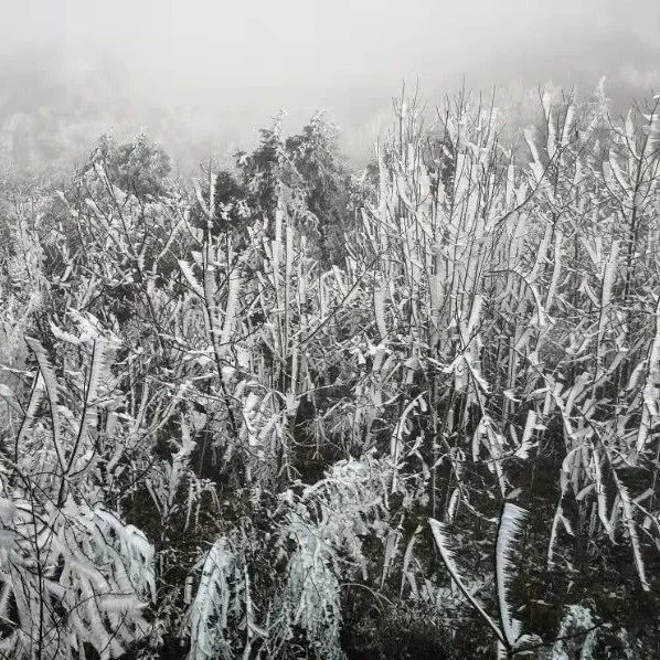 冰冻、霜冻及道路结冰又将重现桂林!