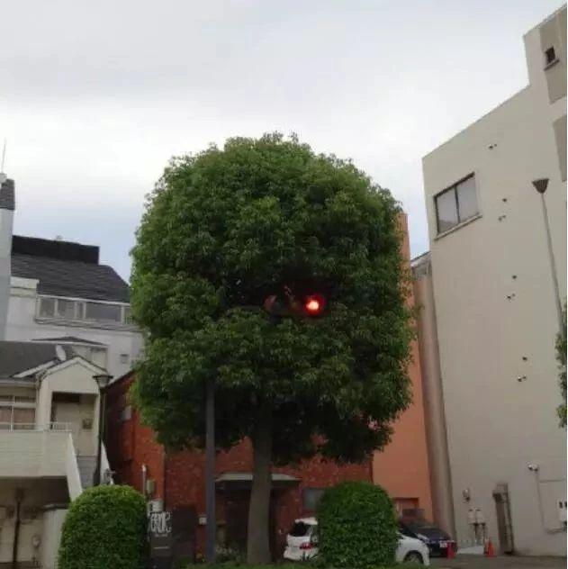 国外搞笑:这红灯不明显啊!闯红灯要扣分?