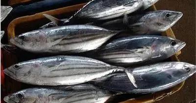 泰国疫情加剧,金枪鱼产量提升,曼谷原料价格下行