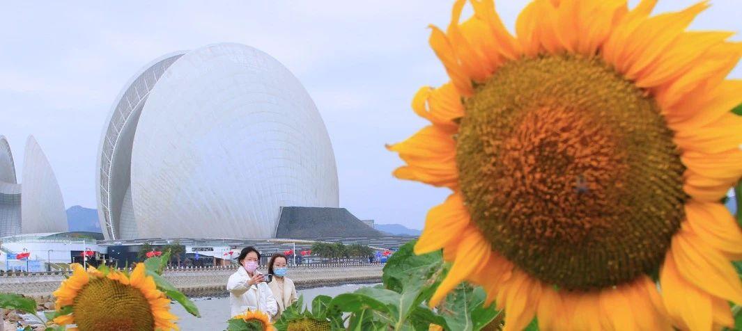早安广东 | 珠海市民赏花