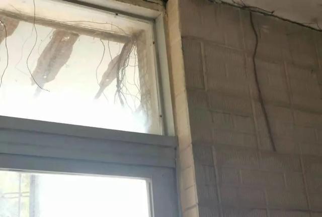 汕头市区有住宅楼外墙上长了一棵树,让住户人心惶惶