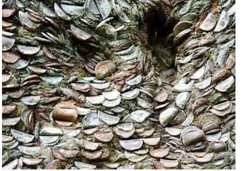 男女野外发现一棵树上长满了硬币,用力抠了一个下来,傻了眼