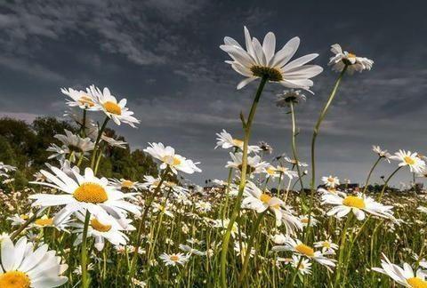 在不久的将来,花开半夏和旧爱,幸福的四星座回归