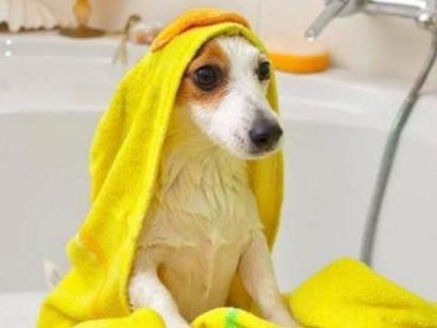 冬天给狗狗洗澡应该注意哪些问题呢?