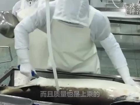 顶级鱼子酱一口就要上千元,看到这些产卵的鱼,你就不觉得贵了!