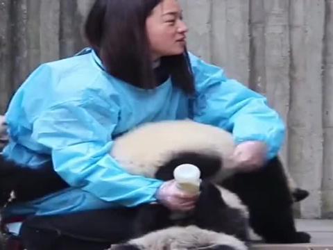 熊猫为了吃的,到底有多拼?