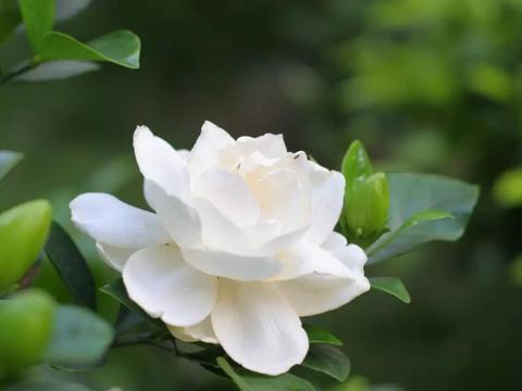 3种基本养不活的植物,养活养开花的,给你点赞