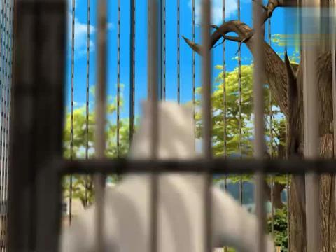 贝肯熊来动物园参观,还想拿食物逗小鸟,结果却被小鸟抢走了食物