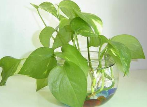 善用这几样东西,根须越发健壮,枝叶常年翠绿!