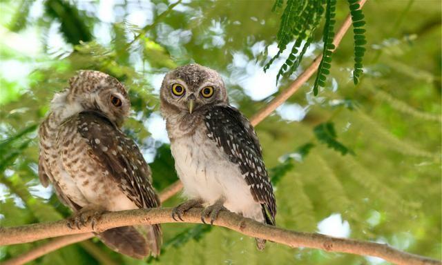 猫头鹰与冬日月亮:月光柔和处,人心柔软时,是时候聆听大自然了