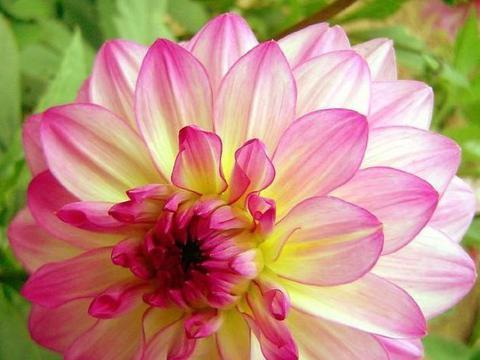 家养几款花卉,叶片硕大,挺拔好看,超养眼的