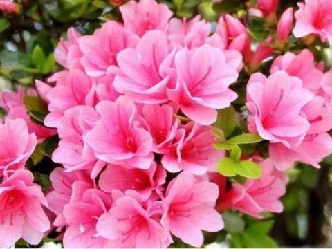 4种花很好养,耐热耐晒更耐旱,是天然空气净化器