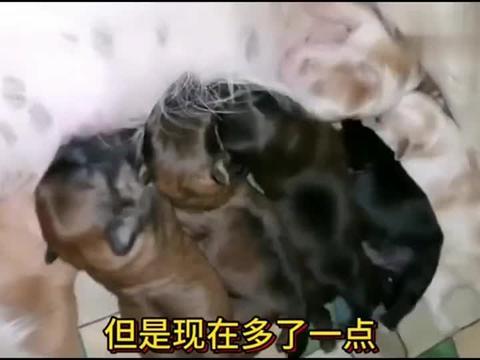 流浪狗:七只小狗出生第五天,不是狗妈妈不要孩子,是我不懂