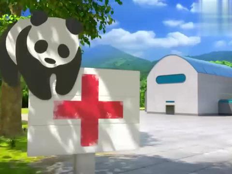 熊熊偷拿老虎食物,用石头代替小鱼干,为了吃的可真拼