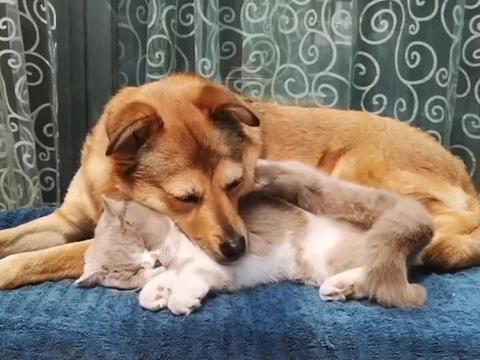 狗狗跟猫咪友好相处,这一幕也太温馨了吧!