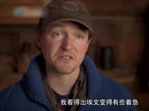 家在阿拉斯加【三】96:小牛崽沦为孤儿,两兄弟打猎再出发!