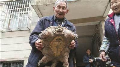 农村老汉抓到一只奇怪生物,询问专家后,说把它杀了吃肉不要放生