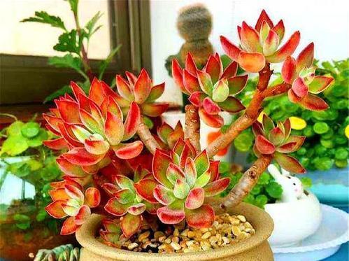 推荐6款多肉植物,小苗很普通,养成老桩后,惊艳了时光!