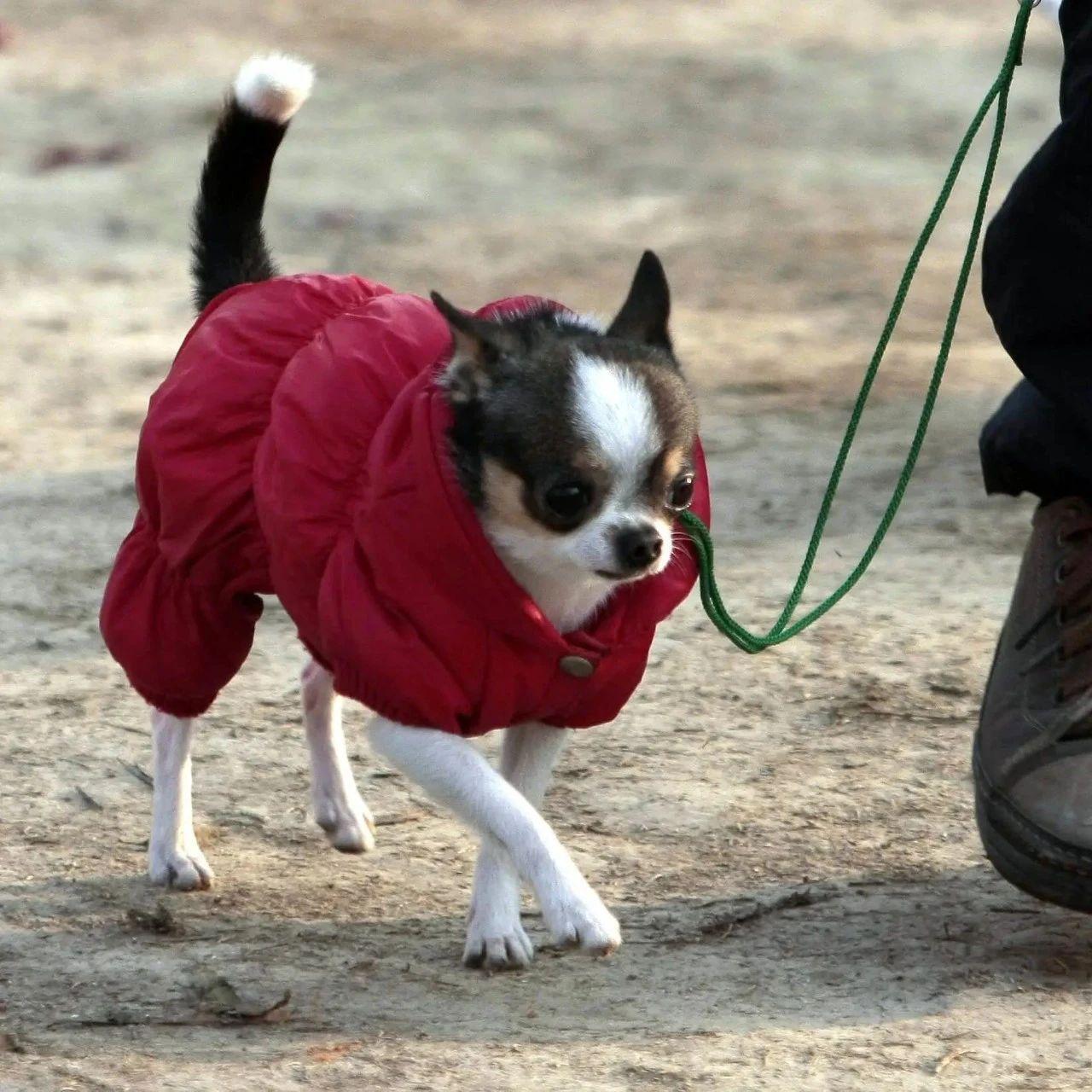 七旬老人不满小区狗吠,毒杀22只宠物犬被判刑