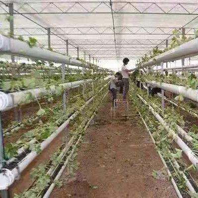 我省国家级农业科技园区实现16个市全覆盖